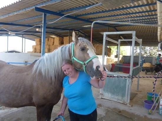 Hacienda Horses: Oro