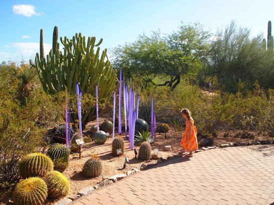 Manhattan Picture Of Desert Botanical Garden Phoenix Tripadvisor