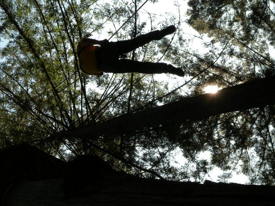 Sonoma Canopy Tours : repeling down