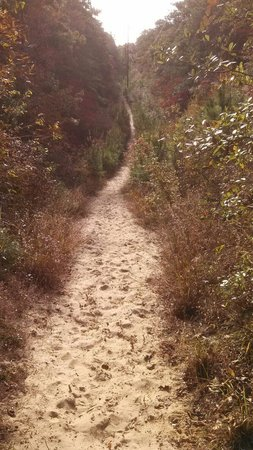 Nags Head Woods Ecological Preserve: sand hill on the sweetgum trail