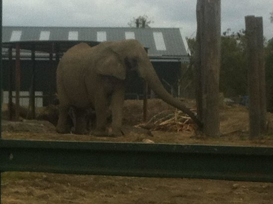 Blair Drummond Safari and Adventure Park: Elephant experience