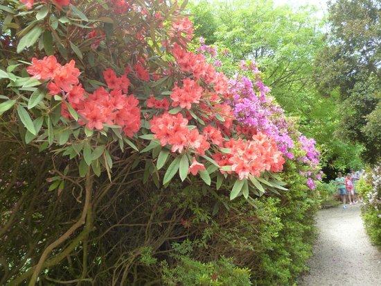 Trengwainton Garden: Beautiful early summer blooms
