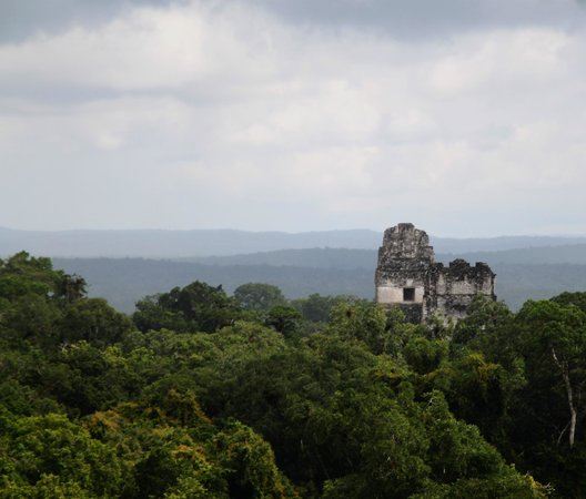 Belize Magnificent Mayan Tours: Overlooking the ruins from Temple 4 (I think???)