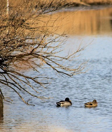 Lyndhurst, Nueva Jersey: Ducks on the Water