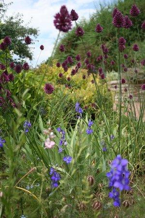 Denver Botanic Gardens: flowers