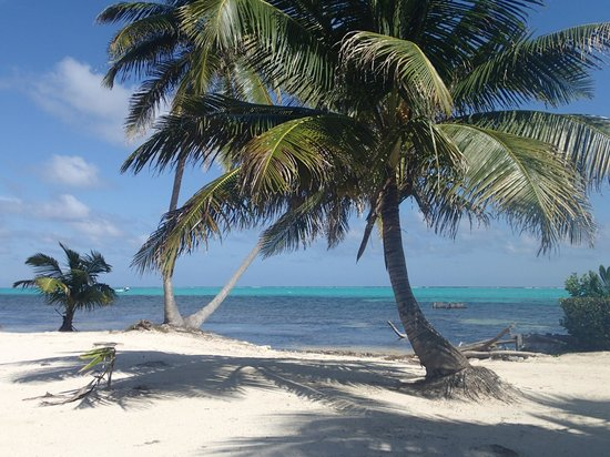 Reef Adventures Belize: Our little private beach for our BBQ
