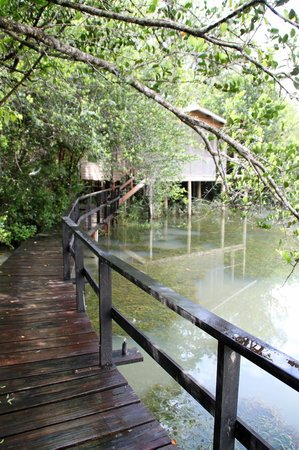 Belize Zoo Jungle Lodge/Tropical Education Center : Our home sweet home for one unforgettable night