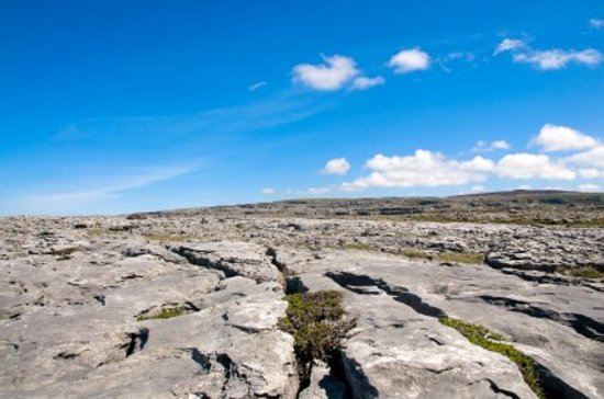 Wild Honey Inn: Burren
