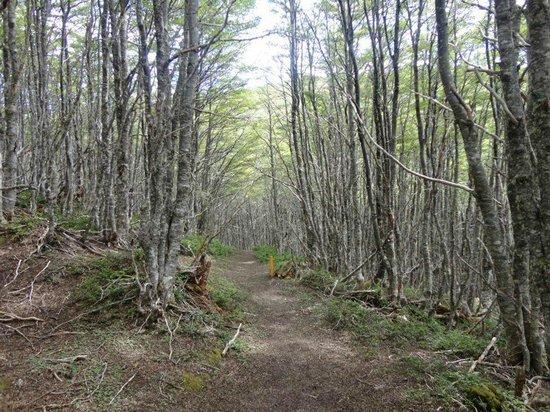 Club Andino Centro de Ski: Trecho da trilha de treeking no Club Andino de Punta Arenas