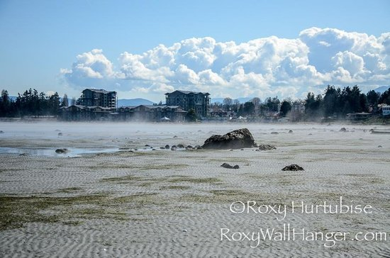 Rathtrevor Beach Provincial Park: Low tide Parksville - I am way out there!