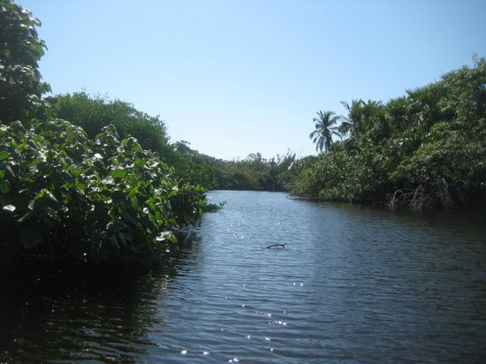 Secrets Huatulco Resort & Spa: Mangroves and Crocs at Mazunte 70 minutes away