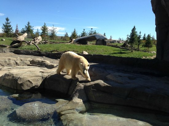 Columbus Zoo: Polar Bears