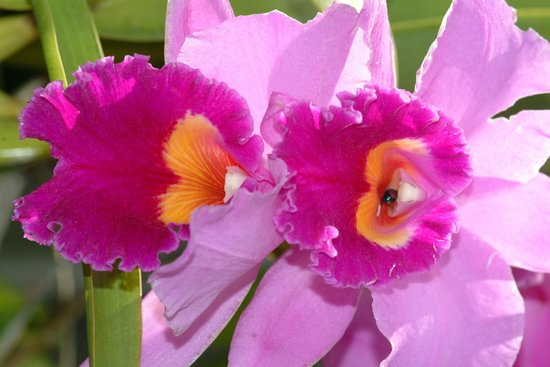 Fairchild Tropical Botanic Garden: an amazing collection of orchids