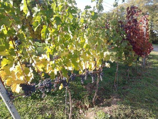 Pannonhalma Abbey : wine