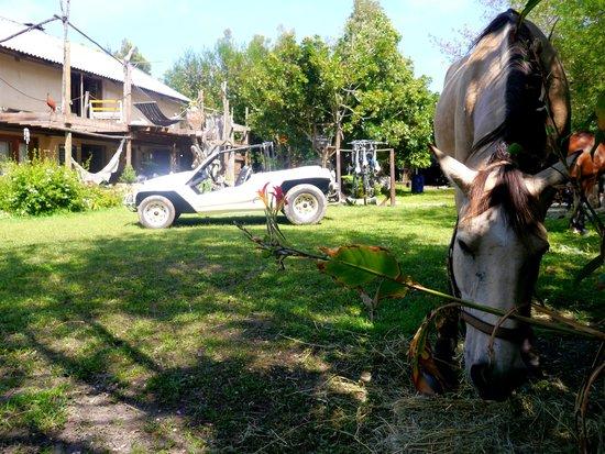 Dijembe Backpackers Hostel: Horses in the garden