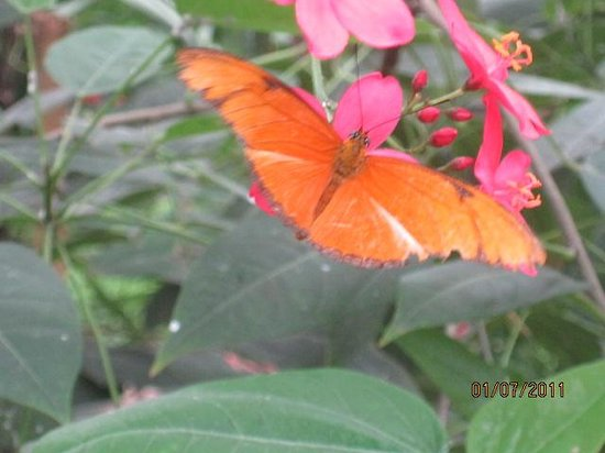 Mariposario de Benalmádena: An orange beauty