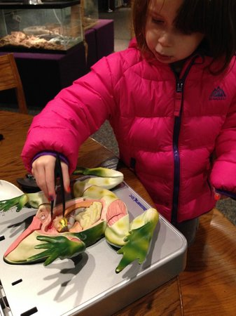 Bell Museum of Natural History: learning made fun