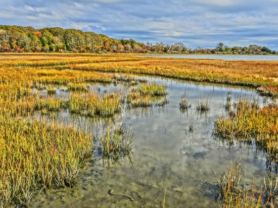 Allens Pond Wildlife Sanctuary : Some of the marshes
