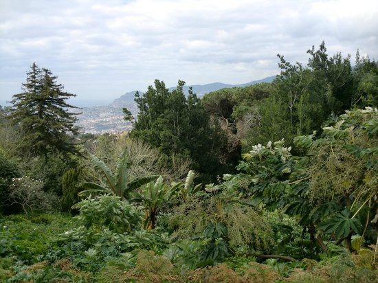 Palheiro Gardens : view toward funchal
