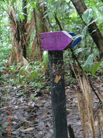 Tortuga Lodge & Gardens: pequeña arañita en el camino del sendero