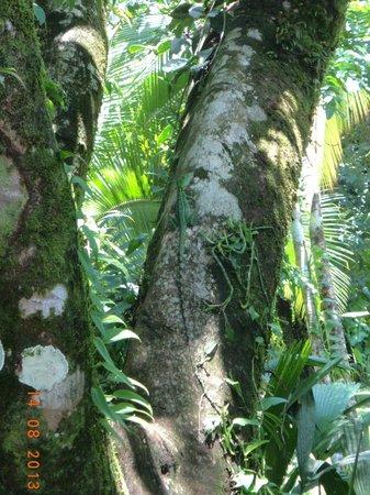 Tortuga Lodge & Gardens: una sorpresa en el jardion