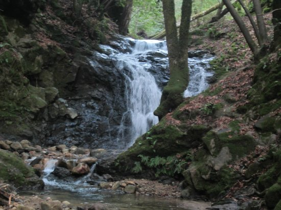 Uvas Canyon County Park: Falls trail