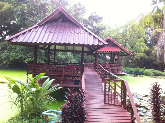 Baan Lotus Guest House : Terrasse du jardin