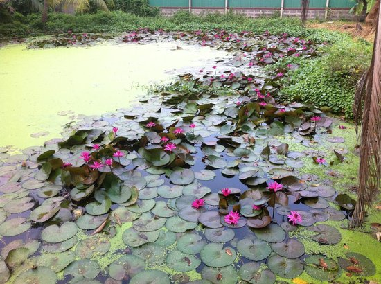Baan Lotus Guest House : Lotus