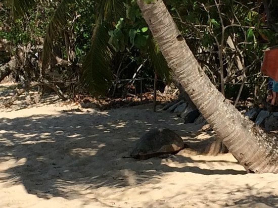 Ecolodge Ankazoberavina : tortue