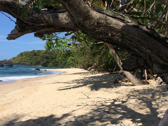 Ecolodge Ankazoberavina : plage