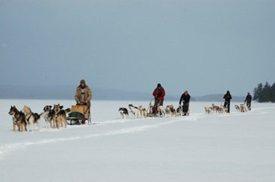 Quiet Bay Log Motel and Bed & Breakfast: Dog sledding