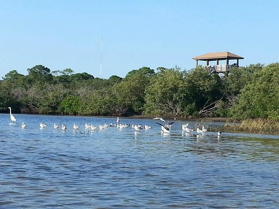 Seminole, Floride : Observation tower and birds at low tide
