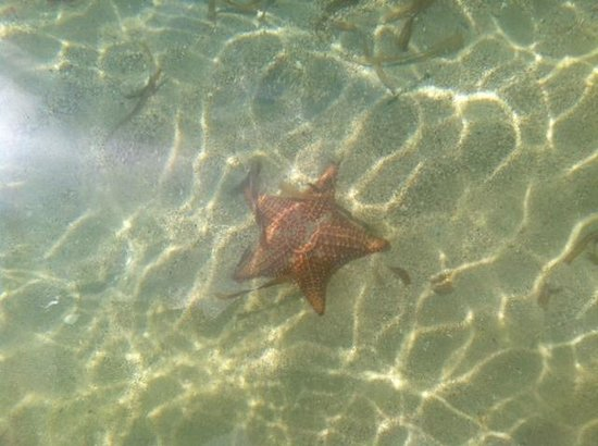 Al Natural Resort: пляж