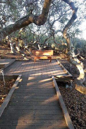 Elfin Forest Preserve: A restful seat among the old Oaks.