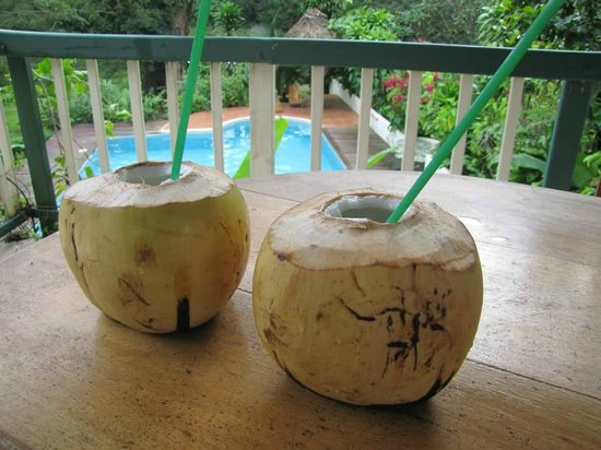 Belize Jungle Dome : Coconuts and rum at the jungle dome!