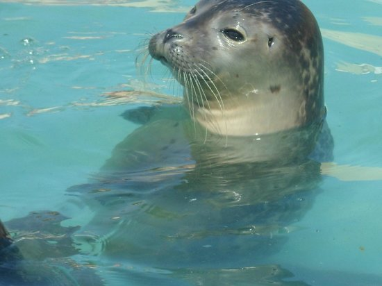 Seal trying to splash us - Picture of Natureland Seal Sanctuary ...