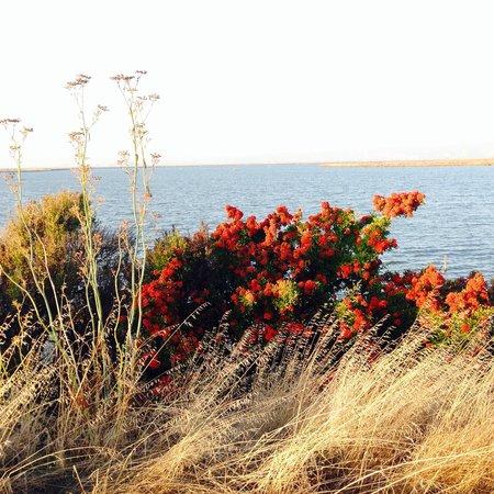 Shoreline Lake Boathouse & American Bistro : Pretty colore