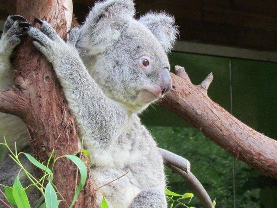 Riverbanks Zoo and Botanical Garden : Rare waking moment
