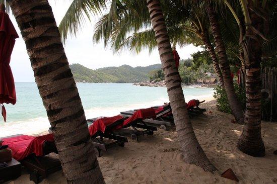 Anantara Rasananda Koh Phangan Villas : Natürlicher Schatten durch Palmen