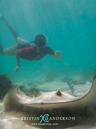 Exmouth, Australie : Snorkeller with big stingray
