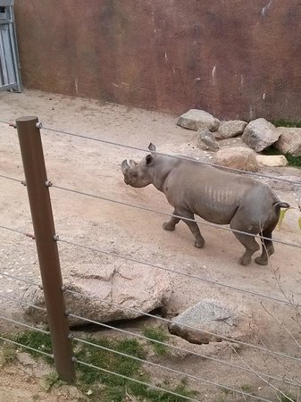 Cheyenne Mountain Zoo: Rhino