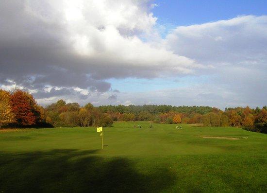Go Ape Moors Valley: Sixteenth green
