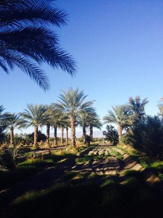 Coachella, كاليفورنيا: Date Garden trees.