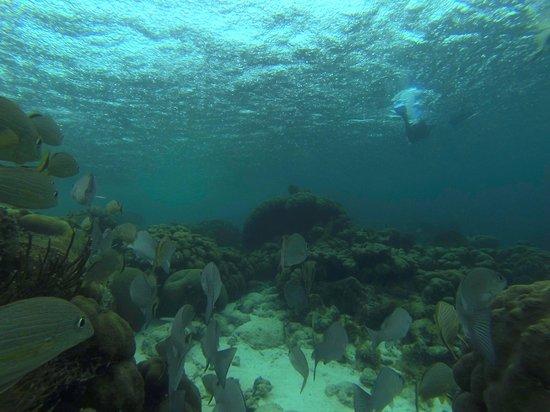 White Sands Dive Shop: Hol Chan