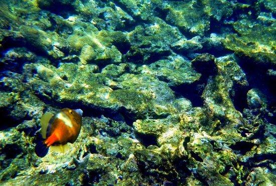 Angel Reef