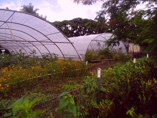 Richmond Vale Diving & Hiking Centre : The garden