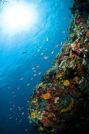 Alor Island, Indonesien: Copyright Muljadi Pinneng Sulungbudi - Alor Wall