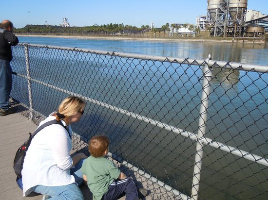 Tampa Electric Manatee Viewing Center : Watching for manatees with power plant in the background