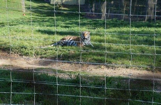 Seaview Lion Park: Seaview Lion and Tiger Park