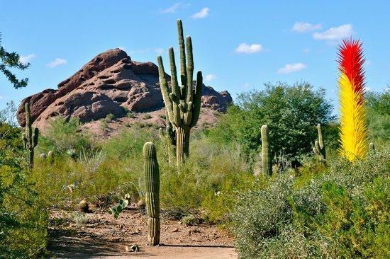 Chihuly Glass Sculpture Picture Of Desert Botanical Garden Phoenix Tripadvisor